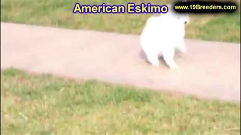 puppies for sale billings mt american eskimo puppies for sale in billings montana mt missoula great falls