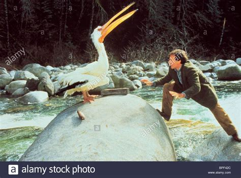 jumanji movie length robin williams pelican jumanji 1995 stock photo