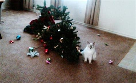 the ultimate supercut of cats destroying christmas trees