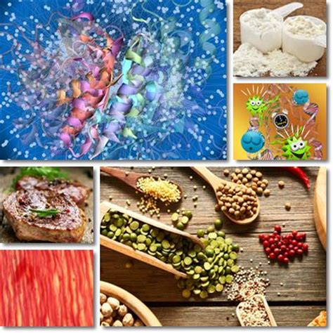 protein health benefits 8 health benefits of protein natureword