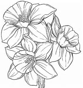 daffodil color daffodil coloring pages