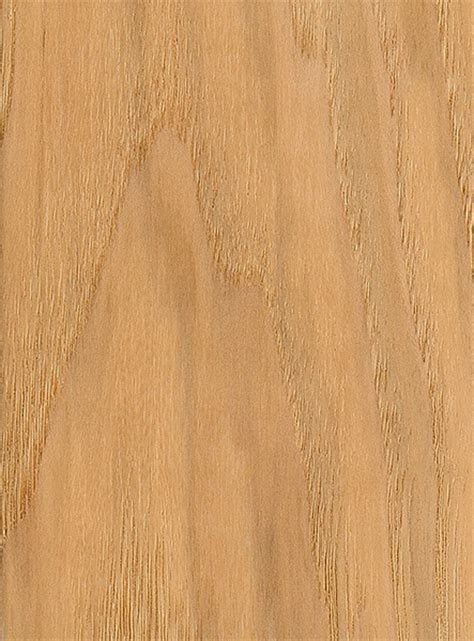 bitternut hickory the wood database lumber identification hardwood