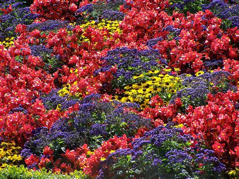 flowers for flower beds english a flower bed displaying a variety of different coloured flowers
