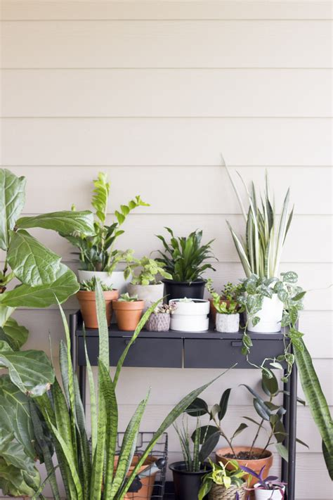 indoor plants indirect sunlight six easy steps to refresh your houseplants for summer