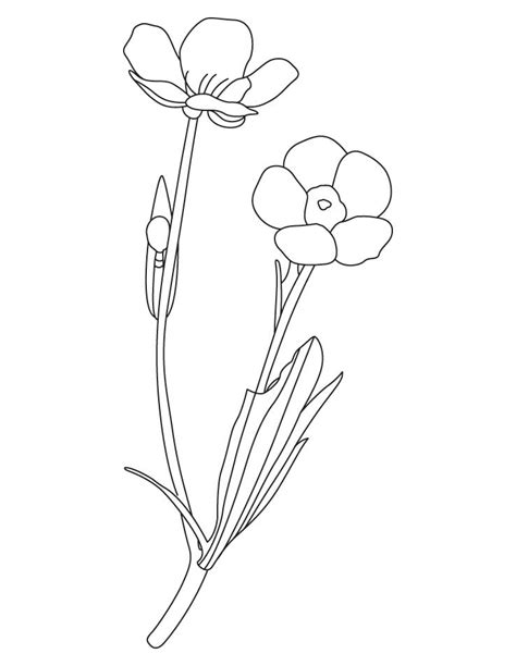 cosmos flower coloring page cosmos flower coloring pages
