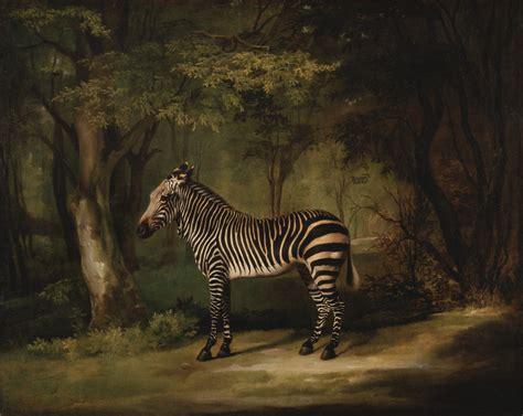 google images zebra file george stubbs zebra google art project jpg