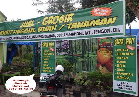 Bibit Sengon Yogyakarta jual grosir tanaman bibit unggul buah murah di jogja