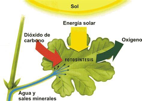 fotosintesis de las plantas cloroplasto laura ruiz thinglink