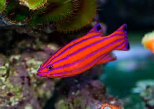 pictures of colorful fish 25 best ideas about tropical fish on pretty