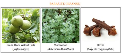 How To When All Parasites Are After Detox by Home Lozz S Wellness Store