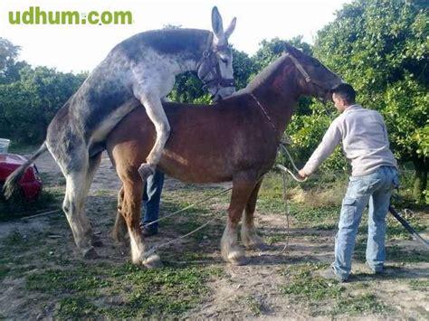 burros con yeguas videos porno de yeguas y burros adanih com