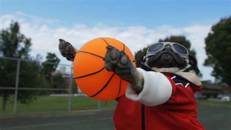 pug basketball fall out boy team up with demi lovato and doug the pug on irresistible