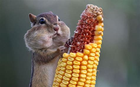 15 photos of animals eating that ll make you smile
