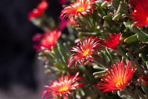 fiori significato famiglia linguaggio dei fiori pollicegreen