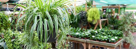 house plants st johns garden centre