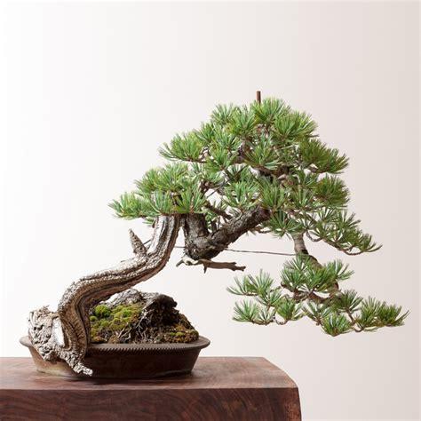 bonsai mirai yamadori why you should visit portand this september bonsai bark