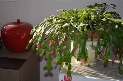 cura piante appartamento cura piante grasse piante grasse da appartamento