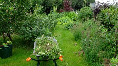 perennial vegetables in a permaculture garden bealtaine