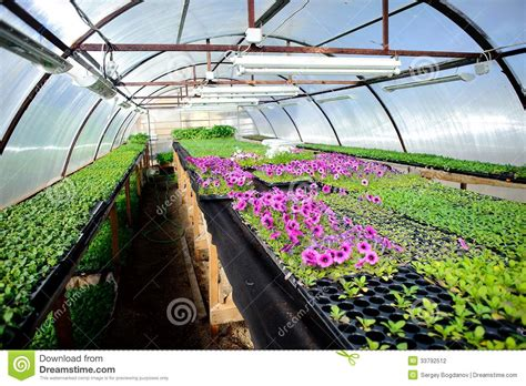 Young plant in nursery stock photo. Image of cultivate