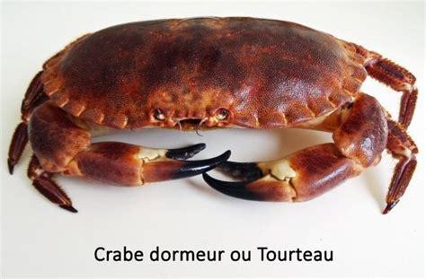 dormeur crabe faune association vie vend 233 e