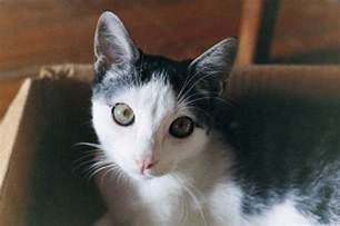 Living Room Ideas For Small House Cat Talk Understanding The Eyes