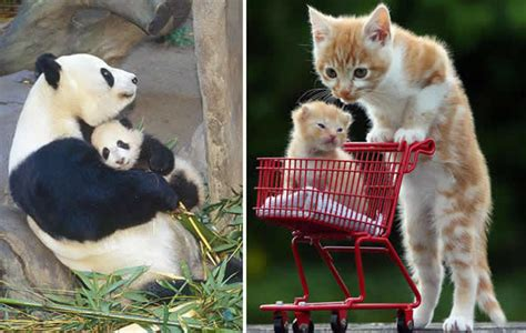 imagenes tiernas de amor entre padres e hijos fotos tiernas de animales padres e hijos nuevas mundo