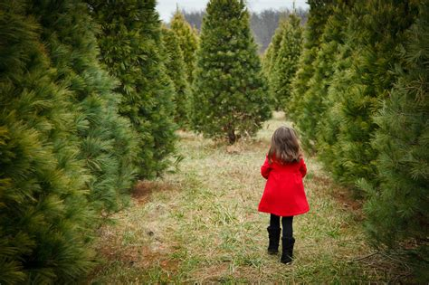 where to cut a x mas tree ri cutting your own tree in the pittsburgh area popular pittsburgh