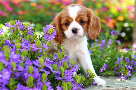 different puppies companion animal psychology different breeds different sensitive period