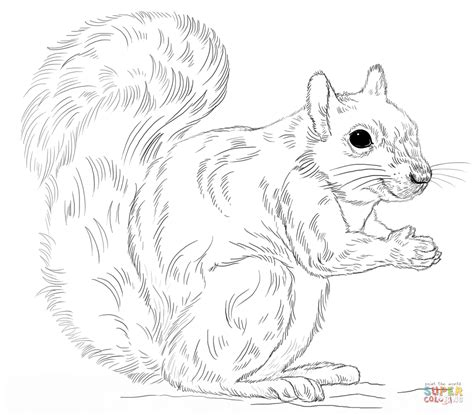 coloring page of a gray squirrel eastern gray squirrel coloring page free printable