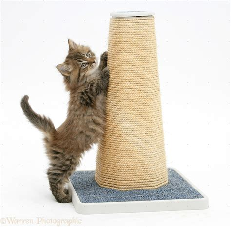 For Cat Scratching the best for a cat s scratching post
