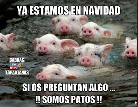 Imagenes Graciosas De Cerdos Para Navidad | no somos cerdos cabras espartanas