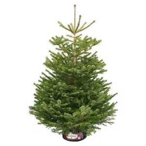 6 7ft nordmann fir real christmas tree