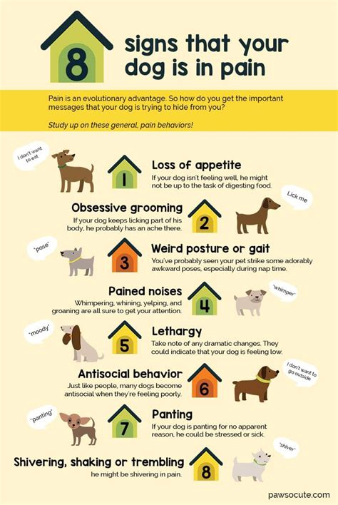 8 Signs Youre Ready To Get A Puppy by 27896 Best Images About Board For Favorite Pets