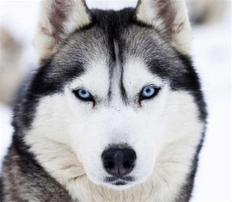 dangerous dogs list most dangerous breeds in the world top ten list