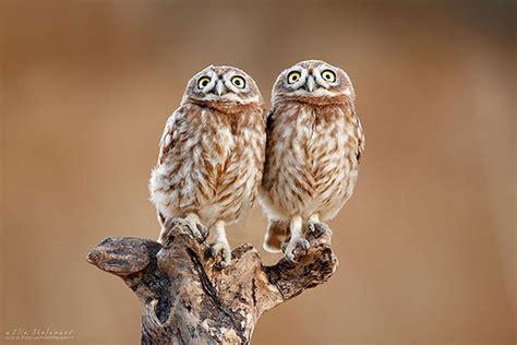 animals twins    cute     wars
