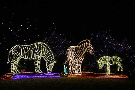 Denver Zoo Lights 2014 171 Cbs Denver Denver Zoo Lights 2014