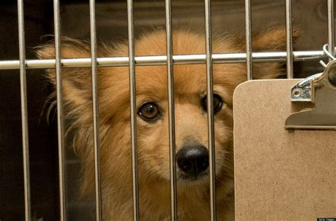 buying a puppy 8 reasons why you should never buy a puppy from a pet store