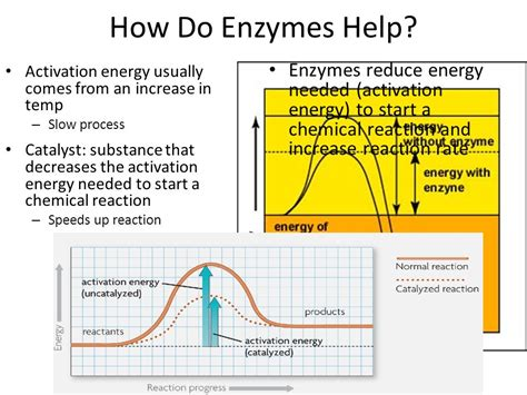 foods that destroy dht how to reduce 5ar enzime in your body enzymes ppt video