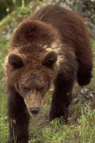 Atlas Hewan 12 hewan langka yang sudah punah