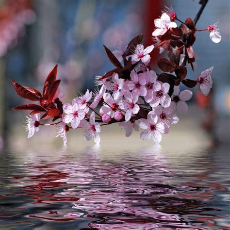 imagenes de flores sobre el agua ranking de las flores m 225 s hermosas del planeta listas en