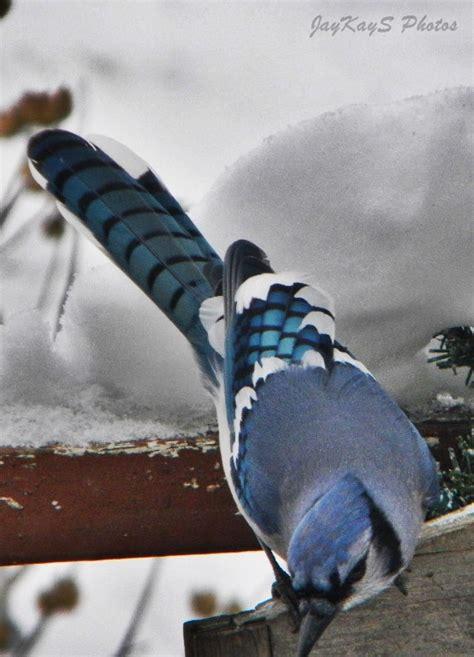 koenigsegg winter 17 best images about winter wonderland in wi on pinterest
