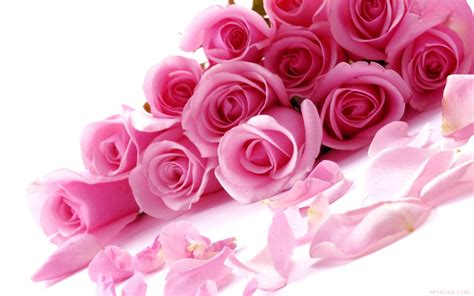 Valentines Day Roses by Top 14 Amazing Valentines Day Wallpaper 2014 Sevelina