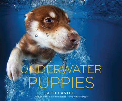 puppies underwater underwater puppies dive into these photos of canine cuteness today