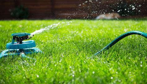 lawn watering best times how and how often to water