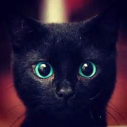 15 best images about black cats on pinterest fraternal