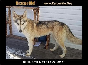 colorado puppy rescue co colorado siberian husky rescue adoptions rescueme org