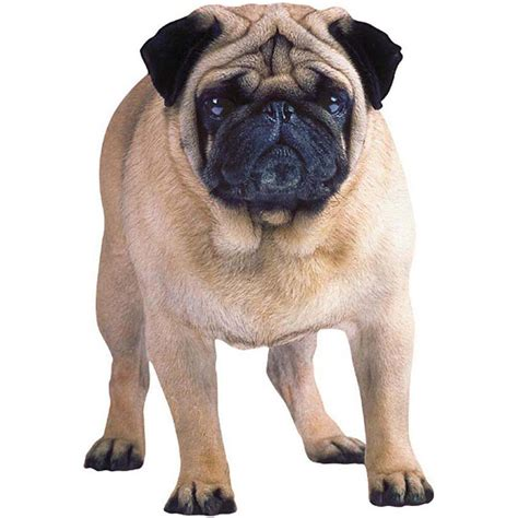 pug card pug cards and pug greeting cards thank you cards pugaddict
