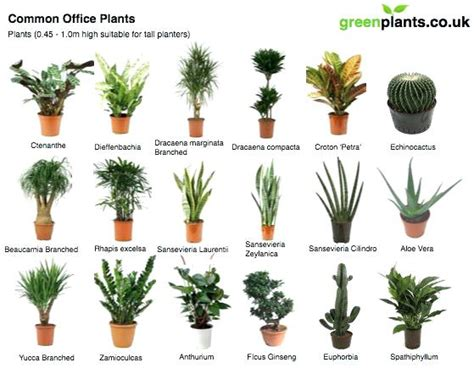 common house plants uk low light office plants luxury plants that need no light and picture of plant indoor office
