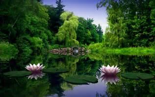 Lotus Flower Pond Top Secret Lotus Flower Page Our Mind Is The Limit