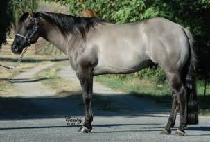 grulla color 92 best images about shining c grulla horses on